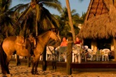 San Pancho Horseback Riding