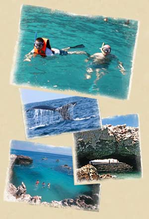Snorkeling In Marrieta Islands, Puerta Vallarta